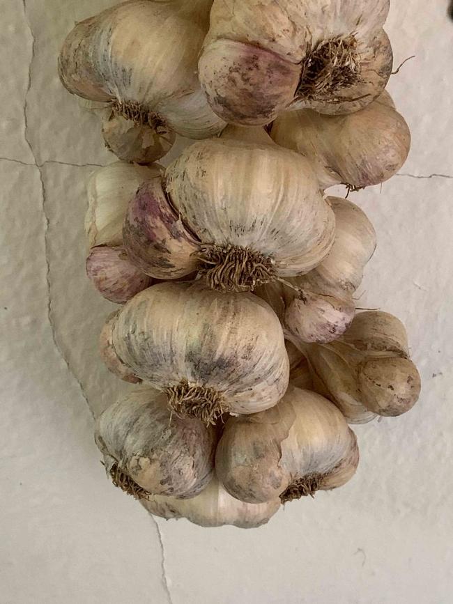 Braided garlic drying, Laura Kling