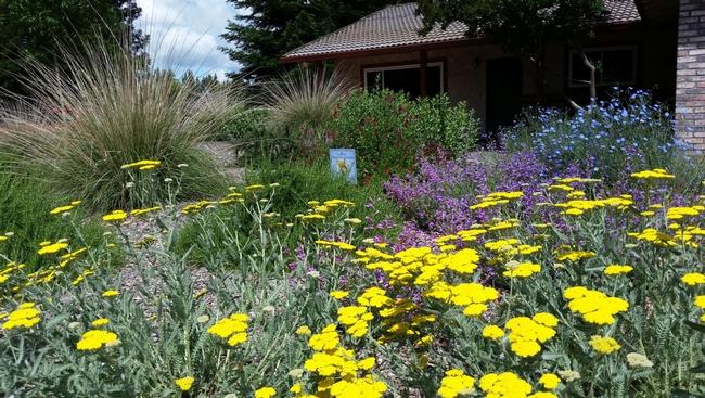 Cottage garden with Mediterranean plants, Eve Werner