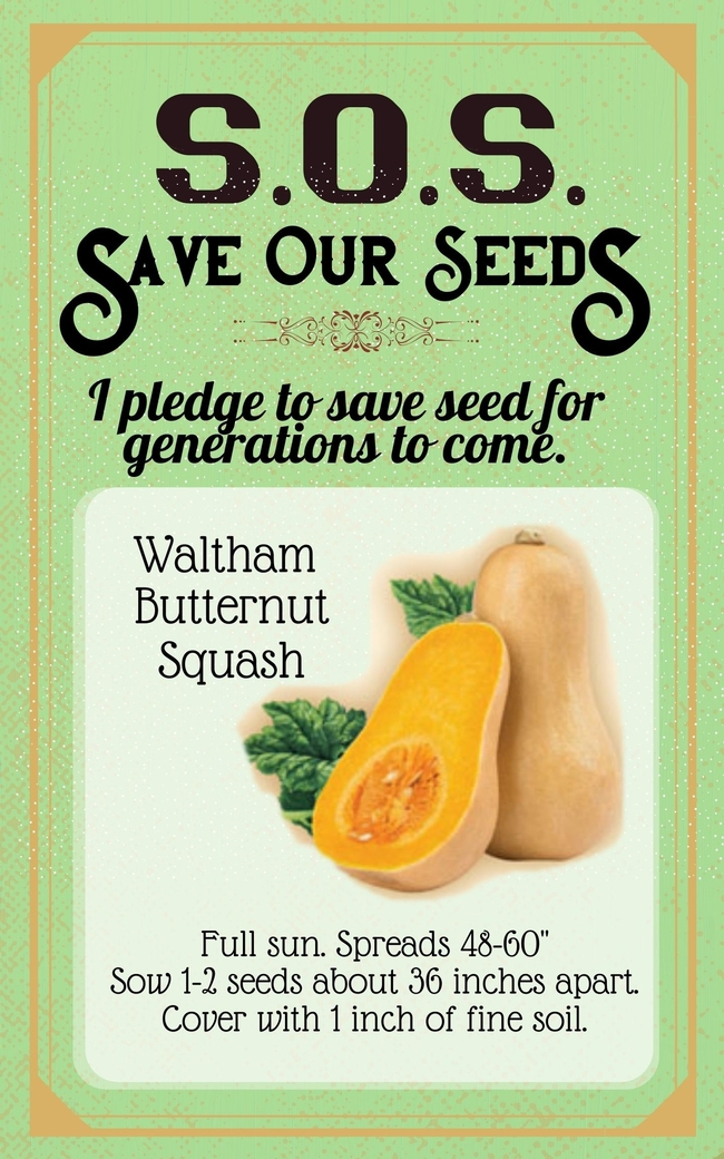 Save Our Seeds Summer 2020 Seed Packet Butternut Squash