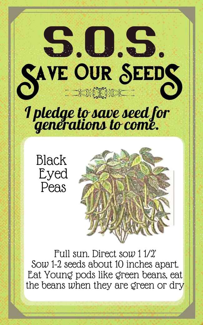 Save Our Seeds Summer 2020 Seed Packet Black-Eyed Peas