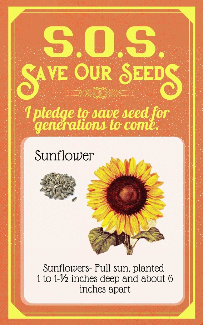 Save Our Seeds Summer 2020 Seed Packet Sunflower