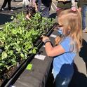 Shopping for plants at the Saturday Farmers Market, Debi Durham