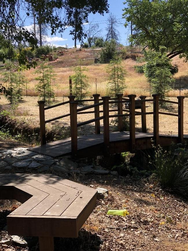 Newly planted redwoods and bridge in Paradise, Debi Durham