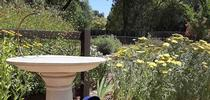 Keep birdbaths clean, Laura Lukes for The Real Dirt Blog Blog