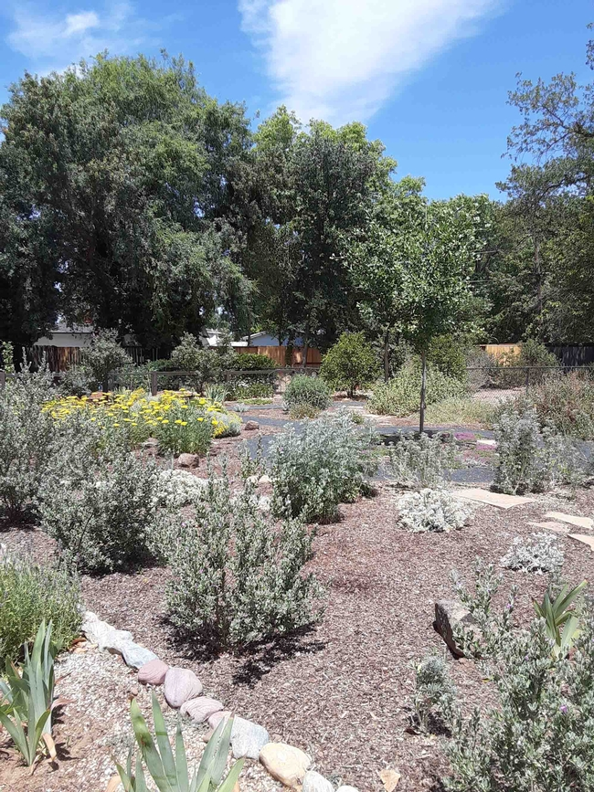 Replace thirsty lawns with drought resistant plants, Laura Lukes