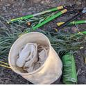 Wildtending tools include collecting bags, loppers, and water, Janeva Sorenson