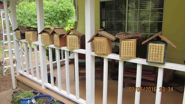 Mason bee boxes, Tom Hansen