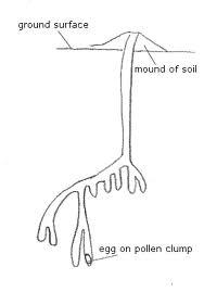 Ground nesting diagram, Bumblebee.org