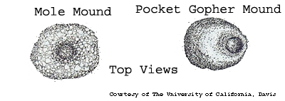 Comparison of mole and gopher mounds, UC, Davis