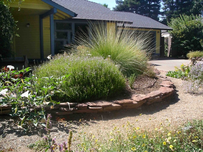 Native plants can create attractive landscape element while providing habitat for wildlife, Cindy Weiner