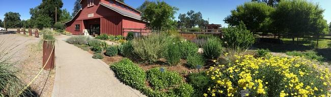 All-Star Garden at Master Gardeners Demonstration Garden at Patrick Ranch, Laura Kling