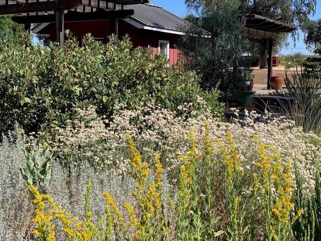 CA Native Garden at Demo Garden at Patrick Ranch, Laura Kling