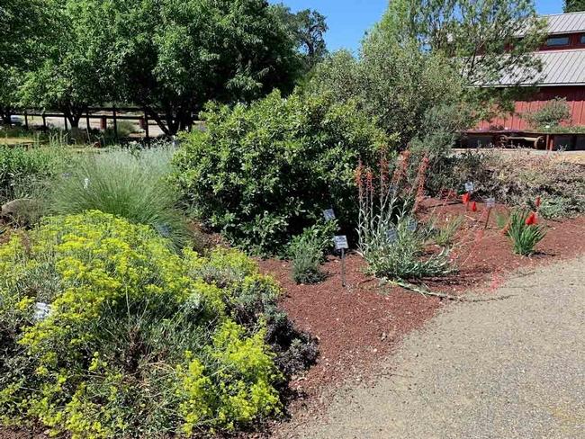 CA Native Plant Garden, Demo Garden at Patrick Ranch, Laura Kling