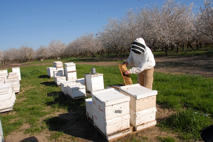 Honey Bee Geneticist Robert E. Page Jr. Named UC Davis ... on