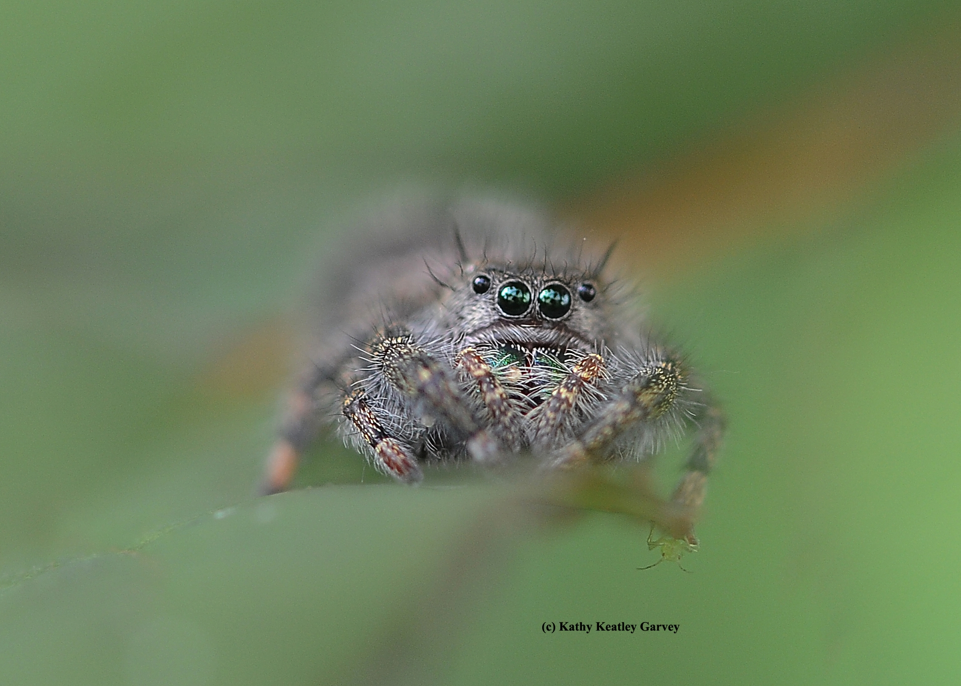 Five Things To Love About Spiders Entomology Nematology News Anr Blogs