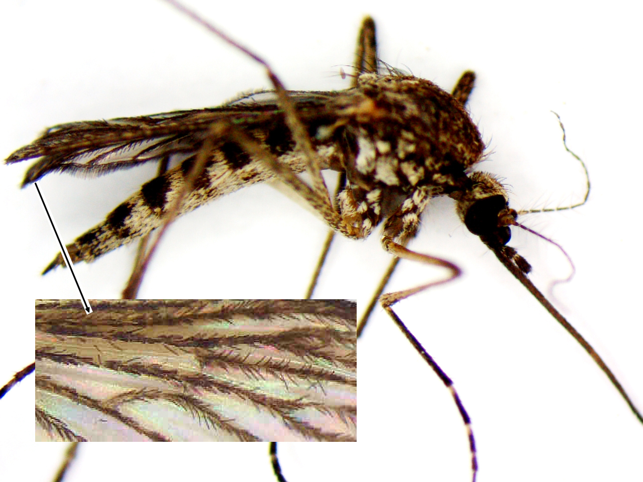 entomological research papers