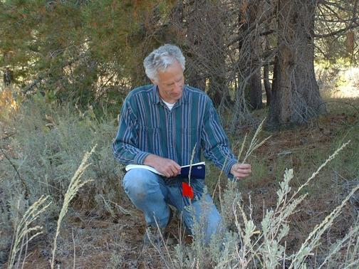 Rick Karban with sagebrush