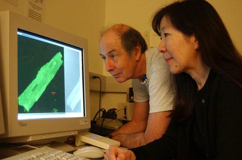 Bruce Hammock and Nipavan Chiamvimonvat collaborating. (Photo by Kathy Keatley Garvey)