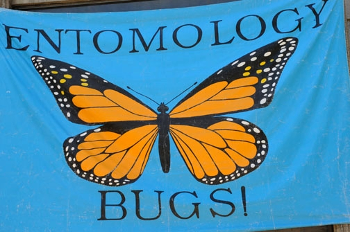 entomologysignbriggs