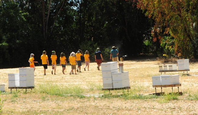 Off to see a hive: the youths in the BioBoot Camp. (Photos by Kathy Keatley Garvey)