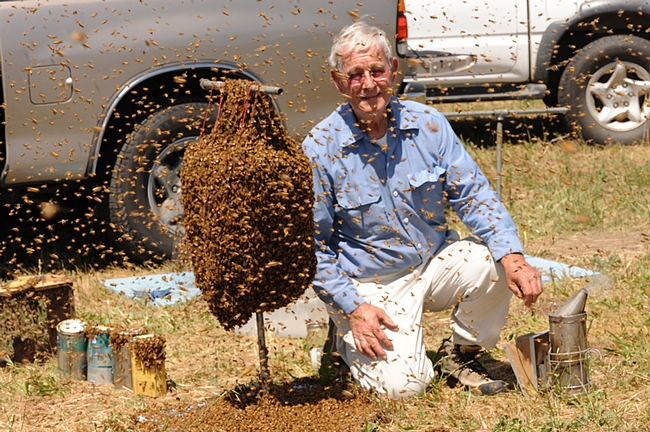 Norm Gary, the bee wrangler. (Photo by Kathy Keatley Garvey)