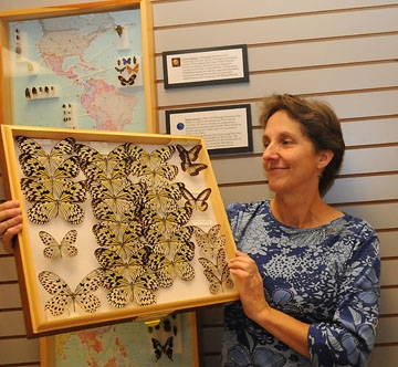 Lynn Kimsey with a Bohart Museum collection (Photos by Kathy Keatley Garvey)