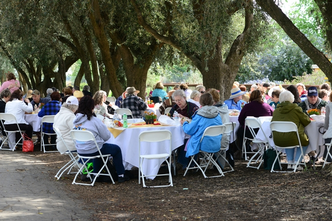 The DAR members and guests lunched beneath olive trees on Bee Biology Road, next to the haven.