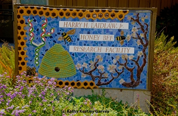 This is the sign that Donna Billick created in front of the Harry H. Laidlaw Jr. Honey Bee Research Facility. (Photo by Kathy Keatley Garvey