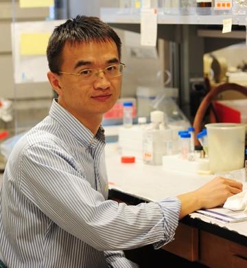 Guodong Zhang in the Hammock lab. (Photo by Kathy Keatley Garvey)