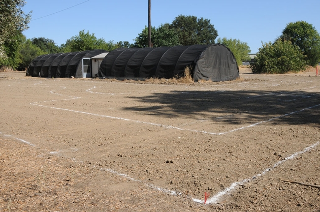 Lines are drawn. Hoophouse in background (Aug. 6, 2009)