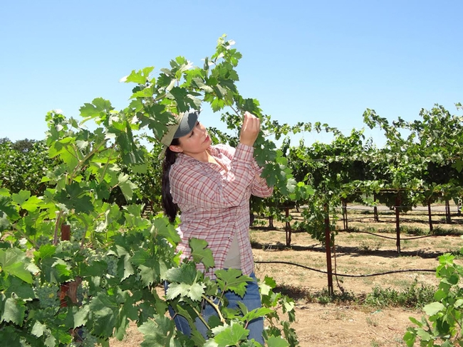 Cindy Preto working in a vineyard. (Photo by Liam Swords)