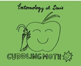 Cuddling Moth