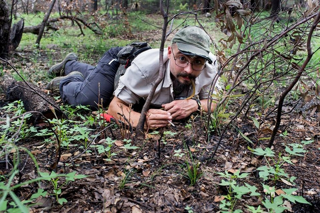 Ant specialist Brendon Boudinot working in the field. This was taken at the Southwest Research Station in the Chiricahua Mountains near Portal, Ariz. by  Roberto Keller, National Museum of Natural History and Science, Portugal.