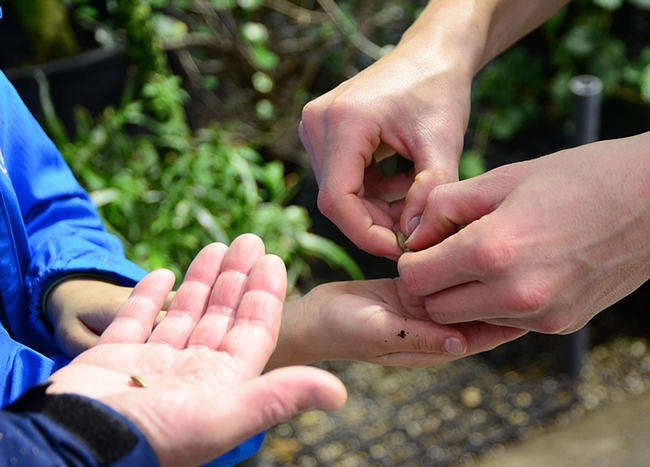 Visitors to the Botanical Conservatory delighted in the dispersal method of the popping
