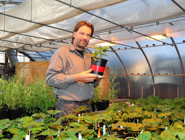Christian Nansen working on his research in a UC Davis greenhouse. (Photo by Kathy Keatley Garvey)