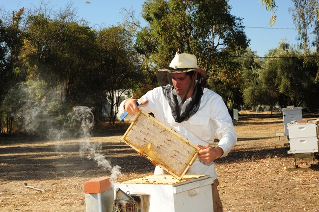 Staff research associate/beekeeper Billy Synk at the Harry H. Laidlaw Jr. Honey Bee Research Facility. (Photo by Kathy Keatley Garvey)