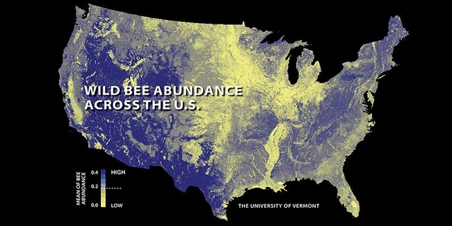 This map shows wild bee abundance across the United States. (University of Vermont)