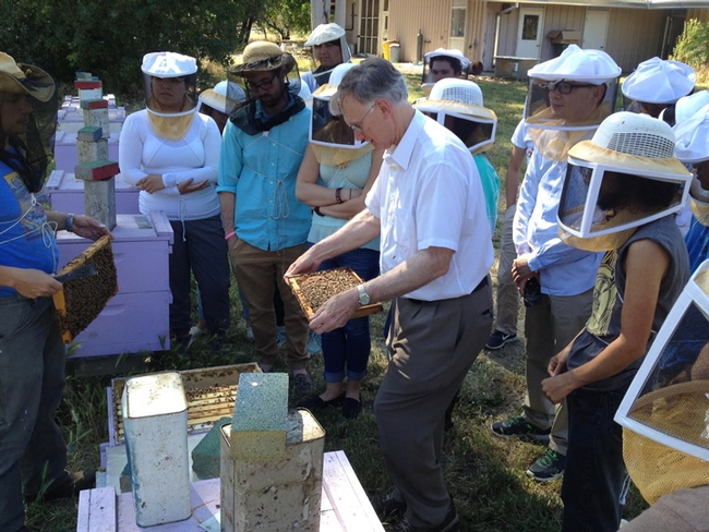 Extension apiculturist emeritus Eric Mussen opens a hive for Steve Nadler's parasitology lab class held May 16 at the Harry H. Laidlaw Jr. Honey Bee Research Facility. Mussen guest-lectured on varroa mites. (Photo by Steve Nadler)