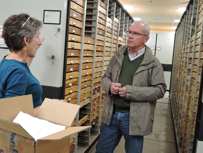 Lynn Kimsey, director of the Bohart Museum of Entomology, discusses museum specimens  with French bee scientist Yves Le Conte. (Photo by Kathy Keatley Garvey)