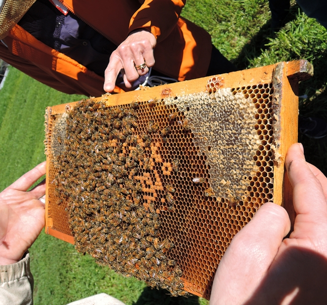 A frame draws close attention at the beginning beekeeper class held in February 2016 at the Laidlaw facility. (Photo by Kathy Keatley Garvey)