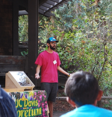 Butterfly specimens are part of the UC Davis Arboretum talk and tour.  (Photo by Elaine Fingerett, UC Davis Arboretum's  academic coordinator)
