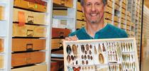 Bohart Museum's senior museum scientist Steve Heydon was among the scientists on the Belize collection trip. (Photo by Kathy Keatley Garvey) for Entomology & Nematology News Blog
