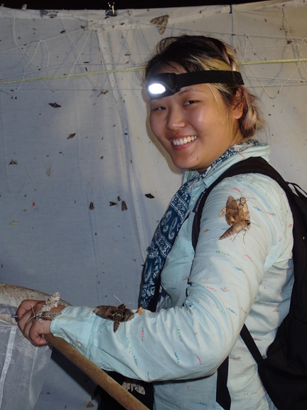 UC Davis graduate student Judy Chung collecting moths in Belize. (Photo by Steve Heydon)