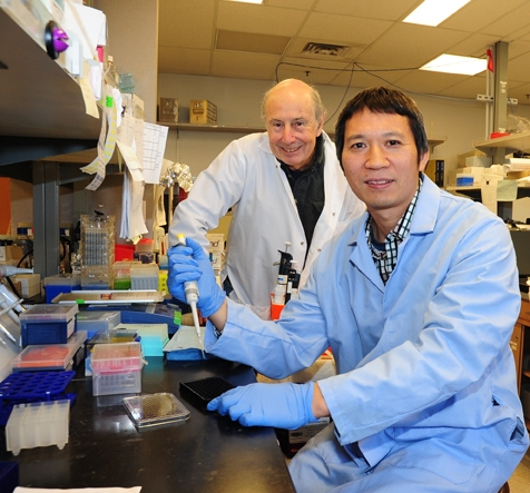 Professor Ting Xu (front) of China Agricultural University and Distinguished Professor Bruce Hammock of UC Davis are working on a grant aimed at detecting pesticides, industrial contaminants and other chemicals in the environment and in the food. (Photo by Kathy Keatley Garvey)