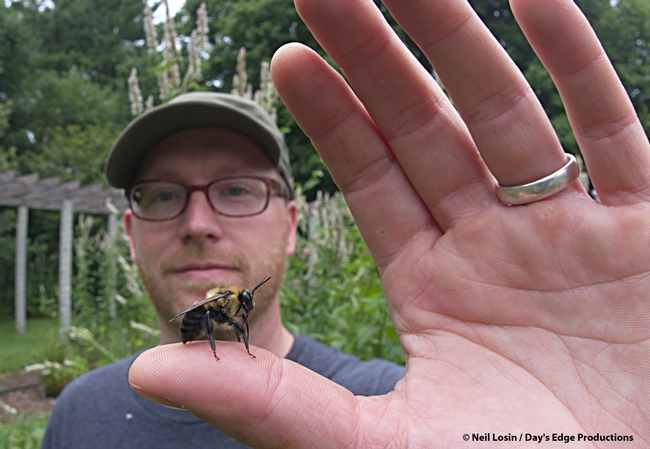 Natural history photographer/filmmaker Clay Bolt checks out the rusty-patched bumble bee, now an endangered species. He went on a mission to find it and made an award-winning film,