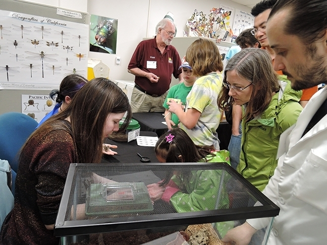 Bohart Museum associate Robbin Thorp (back center), distinguished emeritus professor of entomology, answers questions at the Biodiversity Museum Day at the Bohart Museum of Entomology. (Photo by Kathy Keatley Garvey)