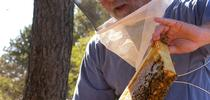 Steve Sheppard (Photo courtesy of WSU) for Entomology & Nematology News Blog