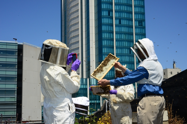 Eric Mussen (right) checking out rooftop beekeeping on the roof of the San Francisco Chronicle Building. (Photo by Kathy Keatley Garvey)