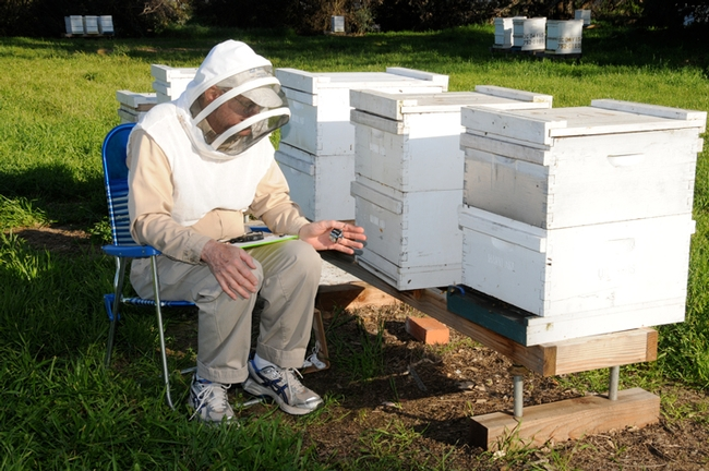 Eric Mussen doing research at the UC Davis apiary. (Photo by Kathy Keatley Garvey)
