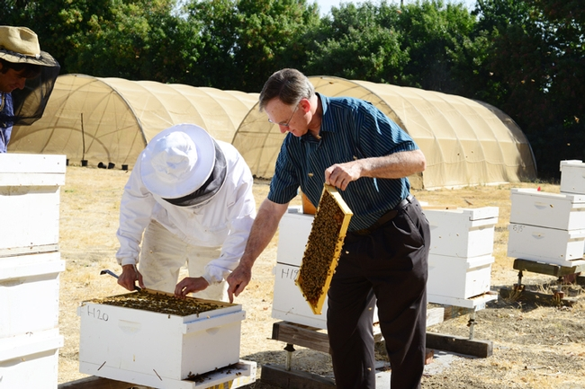Eric Mussen (right): right at home with bee colonies. (Photo by Kathy Keatley Garvey)